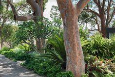 Mosman Landscape Architecture by Secret Gardens - Sydney Landscape Architects Tropical Style, Tropical Garden, Brisbane, Sydney, Dream Garden, Home And Garden, Sunken Trampoline, Trees Top View, Built In Bbq