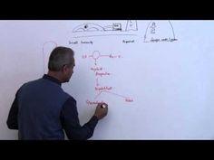 Immunology (Neutrophil) Lecture 3 Part 7