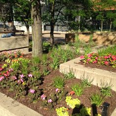 Beautiful pots full of flowers decorate Nicollet avenue in the days of summer