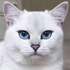 The original cat eye. #fierce