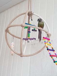 Pippin loves the home made atom. Hula hoops, cable ties and hemp/sisal rope. Diy Parrot Toys, Diy Bird Toys, Diy Toys, Diy Budgie Toys, Diy Bird Cage, Bird Cages, Conure Cage, Conure Bird, Homemade Bird Toys