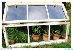 växthus av gamla fönster