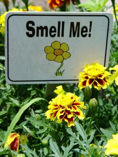 """Smell Me"" is a friendly invitation to your sensory garden guests to interact with fragrant plants."
