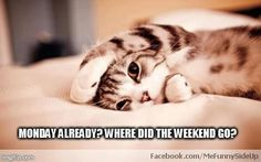 Monday already? Where did the weekend go? :)