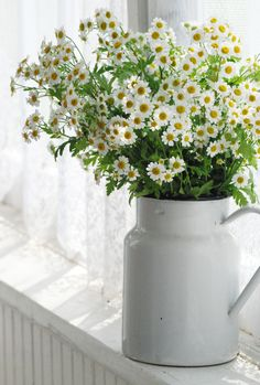 White pitcher and simple bouquet of white flowers. Could use daisies, baby's breath, Queen Anne's lace. My Flower, Fresh Flowers, White Flowers, Flower Power, Beautiful Flowers, Bouquet Champetre, Daisy Love, Daisy Daisy, Daisy Chain