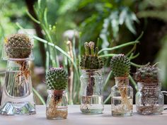 Root Plant Cuttings in Water Plant Cuttings, Garden Crafts, Botany, Glass Vase, Easy Diy, Flora, Succulents, Table Decorations, Pretty
