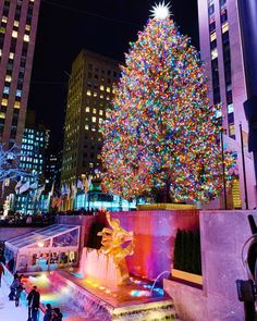 Planning your Christmas trip to New York City york winter New York City Christmas, Christmas Travel, Winter Christmas, Christmas Time, Christmas Planning, Xmas, Central Park, New York Weihnachten, Stephanie Fox