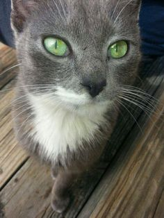 Does that shade of green even exist anywhere else in nature?!?! | 21 Stunning Cats Who Have Prettier Eyes Than You