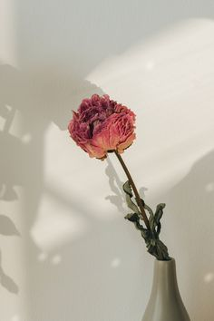 Download premium image of Dried pink peony flower in a gray vase by Teddy about withered flower, minimal wallpaper floral, dry leaf, dry flower, and background image 2330104