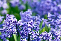 blue-garden-ideas (5)