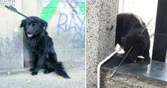 Après avoir été touché à la tête par une flèche, ce chien a erré dans les rues pendant des jours entiers, espérant recevoir de l'aide