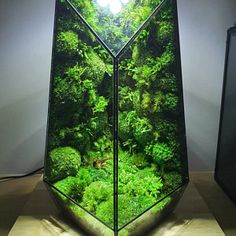 Pre-order: The Vertex ZERO L Pre-designed Completed | Etsy Rare Roses, Big Battle, Moss Terrarium, Moss Wall, Glass Vessel, Natural Disasters, Glass Door, Natural Materials, Indoor Plants