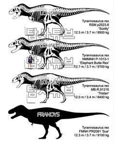 Tyrannosaurus specimens Paper Airplane Models, Model Airplanes, Dinosaur Art, Tyrannosaurus Rex, Moose Art, Elephant, Animals, Dinosaurs, Skeletons