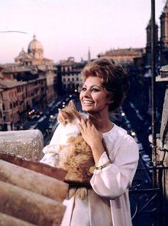 celebrities and their cats  Sophia Loren #cats #famouscats #SophiaLoren