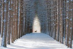 Bambi´s on the way, Quebec/Canada
