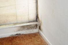 Spray denne olie i huset og du vil aldrig have problemer med skimmelsvamp igen