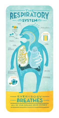 BODY SYTEMS — Rachel Ignotofsky Design