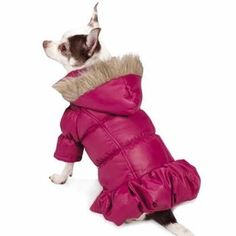 fashion dog jackets