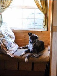 Jake and Kiva's Tiny House | Tiny Home Living Pet Spaces | Pinterest Tiny Houses Pets on best pigs for pets, small mammal pets, dwarf mice as pets, tiny houses on wheels, alot of pets, tiny houseon wheels floor plans, tiny home, tiny dogs, animal pets, strange but cute pets, small chameleon pets, home pets, tiny food, tiny cats, california pets, best cats for pets, australia pets, small pigs as pets,