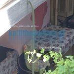 Καλλιθέα: Κράταγε τη νεκρή μάνα στη ντουλάπα- H τραγική ιστορία της 59χρονης πίσω από τη μακάβρια είδηση Blog, Blogging