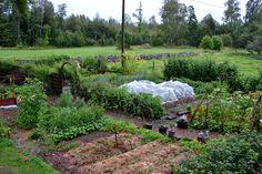 Skillnadens Trädgård: ODLING SOM GÖR SKILLNAD. Sara Bäckmos trädgård