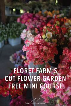 Hydroponic Gardening Learn how to grow, harvest, and arrange stunning seasonal blooms with free tutorial videos from Erin Benzakein, author of the award-winning book, Floret Farm's Cut Flower Garden. Hydroponic Farming, Hydroponics, Permaculture, Gardening For Beginners, Gardening Tips, Formal Garden Design, Cut Flower Garden, Small Flower Gardens, Flower Gardening