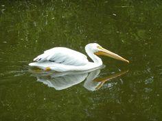 Winnipeg Zoo - Stork Stork, Photos, Animals, Pictures, Animais, Animales, Animaux, Photographs, Animal