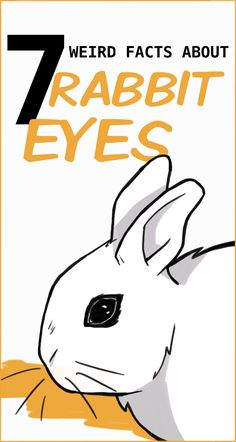 7 Fun Facts About Rabbit Eyes and 5 Problems to Look Out For Eye Facts, Weird Facts, Rabbit Toys, Pet Rabbit, Rabbit Anatomy, Rabbit Facts, Rabbit Information, Indoor Rabbit, Rabbits