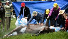 "Steeplechase Horse Arcadius Dies After Winning - NYTimes.com: ""After the Best Race of His Life, a Horse's Death"""