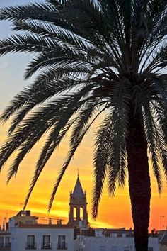 Photo of tree and tower silhouetted against a sunset over the Triana District, Sevilla, Andalusia, Spain.