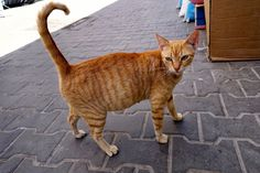 Dr. Plotnick's Moroccan Cat Adventure - Day 4 - Essaouira