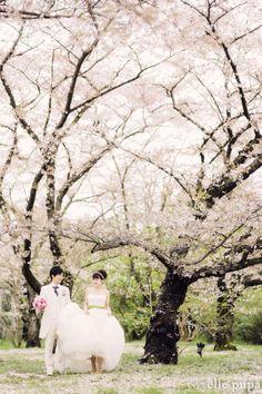桜咲く*京都植物園での前撮り |*ウェディングフォト elle pupa blog*