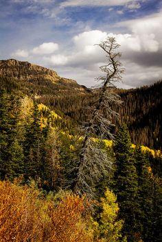 autumn - Wolf Creek Pass - Colorado - 10-18-14  01