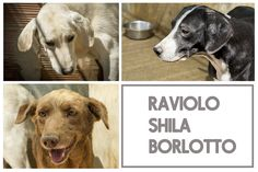 Raviolo, Shila e Borlotto, rifugio di Crocchetta, foto di Maggie Gometz
