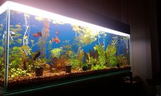 Wonderful_aquariums-ww (7)