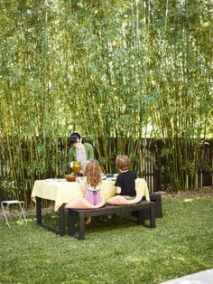 Bamboo screening for behind observation deck