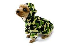 A Bathing Ape Dog Store Keeps Your Pooch Looking Cool #pets