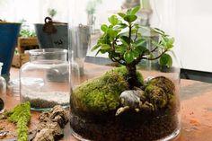 Mini-Garten im Glas:  Kies, Puzzolane und Erde als Substrat