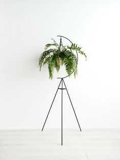 Crescent Plant Stand | Vases | Homewares | The Store by Fairfax