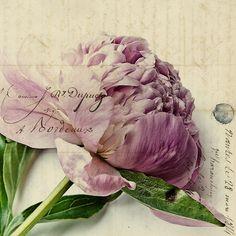 Pretty in Pink | Flickr: Intercambio de fotos