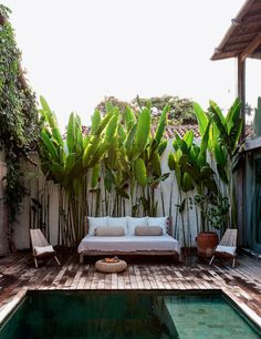 Brazil summer house with big leaves against a white wall, privacy, serenity.