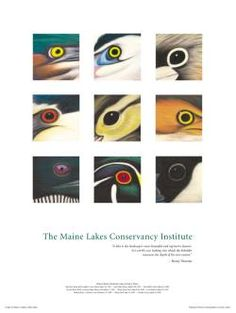 find this print. Maine Lakes Conservancy Institute,