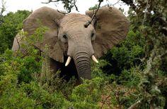 Bitte unterschreiben: EU darf keine Komplizin der Wilderer sein