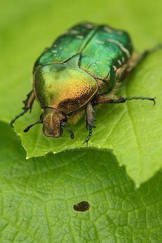 Die 95 Besten Bilder Von Käferarten Butterflies A Bugs Life Und
