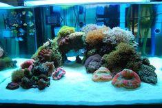 Love the minimal aquascaping, color, and texture. Good balance of color too Coral Reef Aquarium, Saltwater Aquarium Fish, Saltwater Tank, Marine Aquarium, Seahorse Aquarium, Home Aquarium, Nature Aquarium, Aquarium Design, Aquarium Ideas