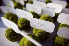 Mini-pomander escort cards - would be a nice pop of green for the tables.