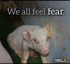 All animals only want to feel safe and be loved. <3