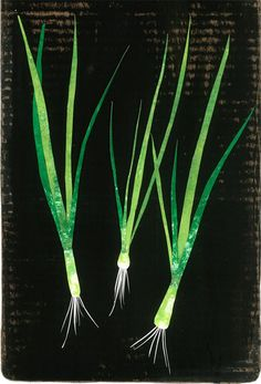 GOOD FOOD: spring onions (poster)