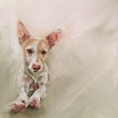 "Andaluz Podenco 'Piet' oil on canvas 8""x8"" - commission piece by Julie Brunn"