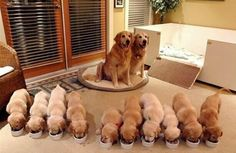 Checkout this accessible puppy whelping box!! Fantastic idea